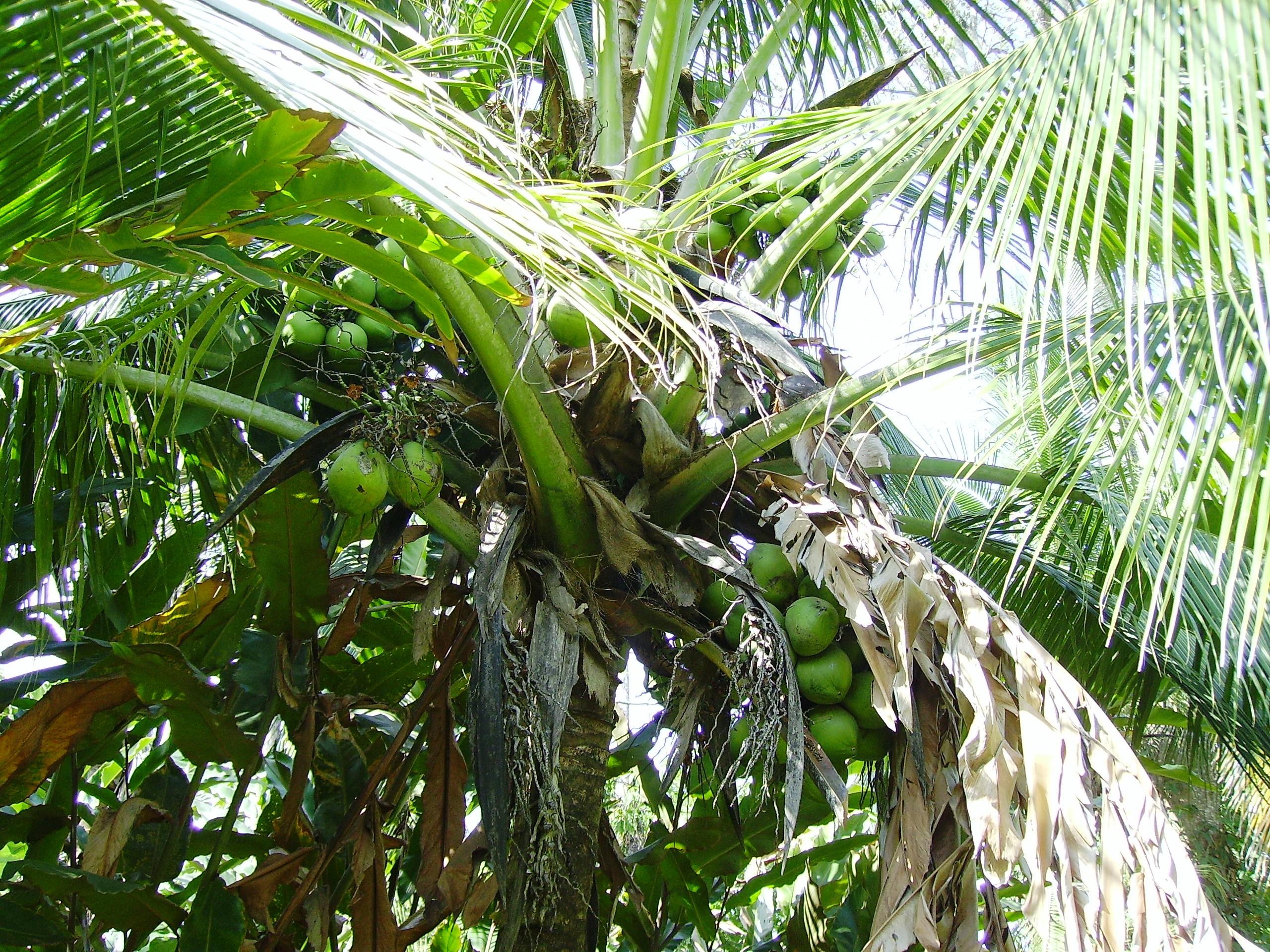 site rencontre cocotier